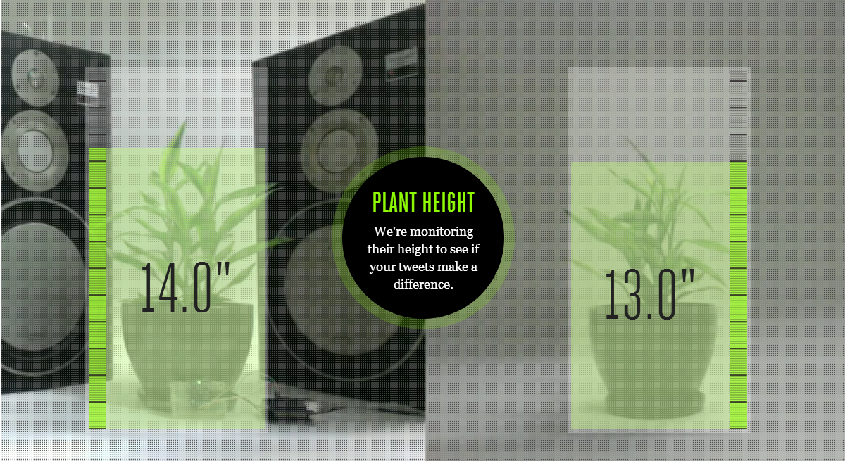 plant-height