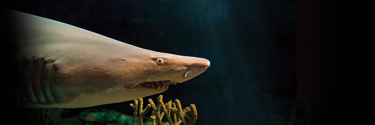 Иллюстрация: © National Aquarium.