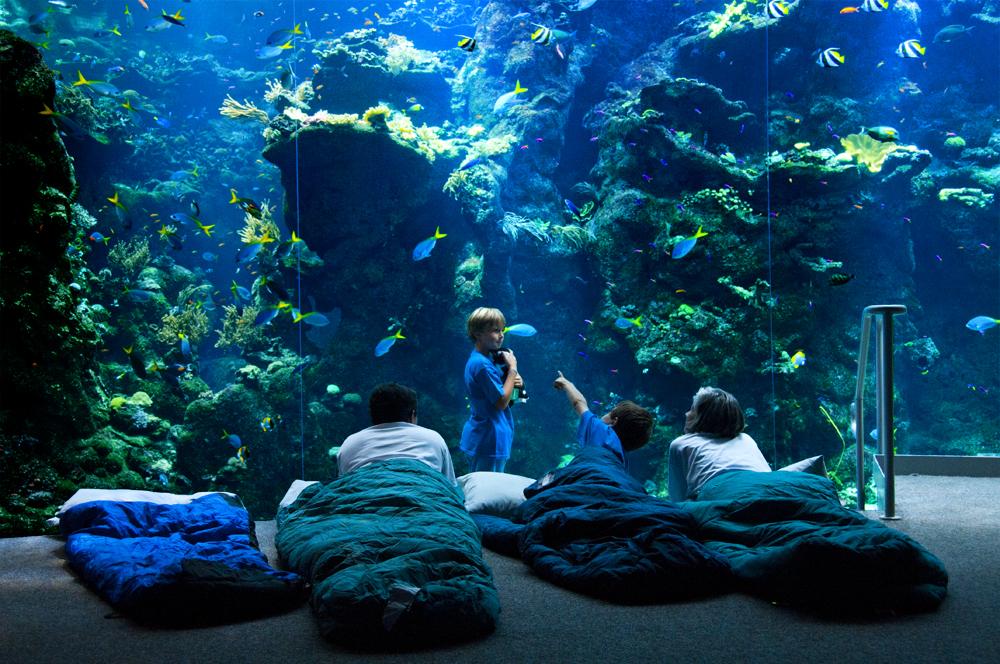 Фото: © California Academy of Sciences.